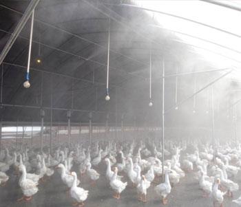 养殖场喷雾除臭消毒降温案例